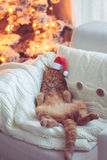 Christmas. Lovable ginger cat wearing Santa Claus hat sleeping on chair near Christmas tree at home