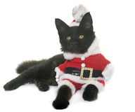 Christmas maine coon kitten Royalty Free Stock Image