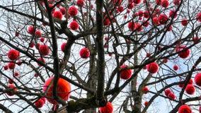 Christmas Market Hellbrunn Palace, Salzburg, Austria. Tree with big red balls at Christmas Market, Christkindlmarkt Hellbrunn Palace, Hellbrunn Advent Magic stock footage