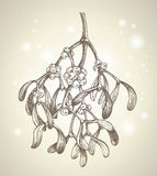 Christmas mistletoe branch drawing. Vector hand drawn mistletoe branch drawing vector illustration