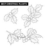 Christmas mistletoe branch drawing. Stock Photography