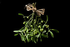 Christmas mistletoe. Mistletoe bunch on black background stock photography