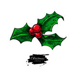 Christmas mistletoe, holly berry with leaves. Hand drawn vector. Illustration. Botanical Xmas decor element. Great for logo, icon, label, holiday decoration Stock Photography