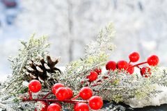 Christmas mistletoe. On snowy background stock photos