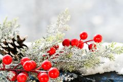 Christmas mistletoe. On snowy background stock image