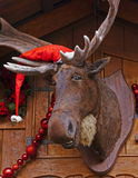 Christmas Moose. Elk in Santa hat at xmas market royalty free stock images