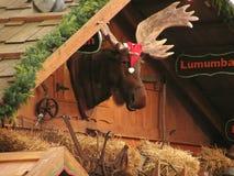 Christmas Moose. Elk in christmas cap on market Royalty Free Stock Photos