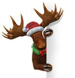 Christmas Moose Blank Sign. Christmas holiday northern moose with huge antlers holding a blank white sign wearing a santa clause hat and a wreath with a red bow Royalty Free Stock Photo