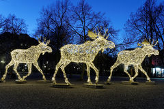 Christmas moose floc made of led light Stock Image