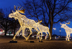 Christmas moose floc made of led light Royalty Free Stock Photo