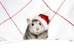 The christmas mouse. With red cap royalty free stock photos