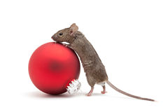 Christmas mouse and bauble isolated stock image