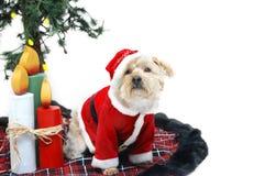 Christmas Mutt Royalty Free Stock Photo