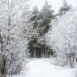 Christmas mysterious winter snowy road in forest fog, Russia Royalty Free Stock Images