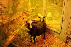 Christmas nativity crib sets Stock Photography