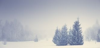 Christmas nature. Foggy winter landscape. Frosty christmas trees on snowy meadow. Xmas background stock photos