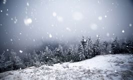 Trees covered with hoarfrost and snow in winter mountains Stock Image