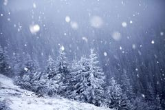 Trees covered with hoarfrost and snow in winter mountains - Chri Stock Image