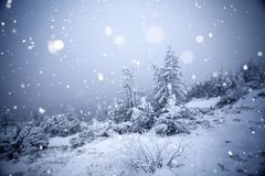 Trees covered with hoarfrost and snow in winter mountains  Royalty Free Stock Image