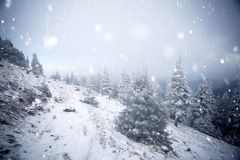 Trees covered with hoarfrost and snow in winter mountains - Chri Royalty Free Stock Photo