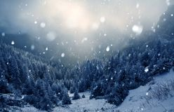 Trees covered with hoarfrost and snow in winter mountains - Chri Stock Images