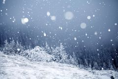 Trees covered with hoarfrost and snow in winter mountains - Chri Royalty Free Stock Photography
