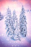 Christmas or New Year color background, snow-covered firs with snowflakes stock photography
