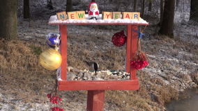 Christmas New Year decorated bird feeder and hungry wild birds stock video footage