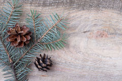 Christmas or New Year decoration background fir-tree branches Royalty Free Stock Images