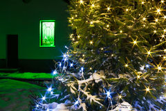 Christmas and  new year fir tree  night with illumination  light Royalty Free Stock Photography