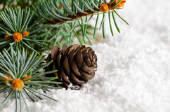 Christmas and new year fir-tree on snow Stock Image