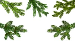 Christmas, New Year. Set from the five green realistic branch of fir or pine close-up. branched out. Isolated on white royalty free illustration