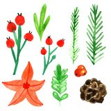 Christmas and New Year set with winter plants and berries. vector illustration