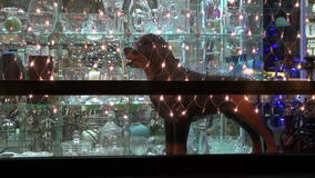 Christmas New Year shop window with light decoration and dog sculpture stock video
