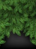 Christmas and New Year template of realistic branches of Christmas tree on black background. EPS 10 stock illustration