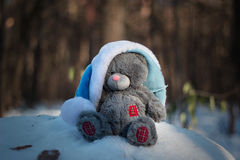 Christmas and new year. Toys teddy bear in the wood Stock Image