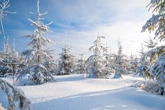 Christmas and new year trees covered with snow in winter forest Royalty Free Stock Photos