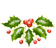Christmas and New Year Vector holly decoration. Isolated on white Royalty Free Stock Photography