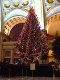 christmas norway tree στοκ εικόνα