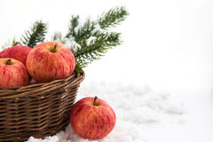 Christmas сomposition with red apples in basket and branch of c Stock Photo