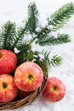 Christmas сomposition with red apples and branch of christmas t Royalty Free Stock Images