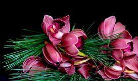 Christmas Orchids. Stock Photo