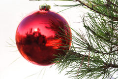 Christmas Ornament. On a pine tree Stock Image