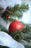 CHRISTMAS ORNAMENT. Hanging on pine tree Royalty Free Stock Photos