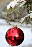 Christmas Ornament, Christmas Decoration, Christmas, Tree royalty free stock photo