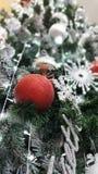 Christmas ornament on the christmas tree. Christmas ornament tree stock images