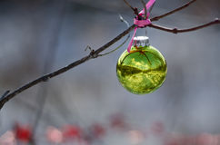 Christmas Ornament Decorating an Outdoor Tree Reflecting Snowy Scene Royalty Free Stock Photography