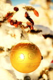 Christmas Ornament. Gold Christmas ornament on pine tree royalty free stock images