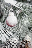Christmas ornament hanging on pine branch royalty free stock photography