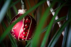 Christmas ornament. A Christmas ornament hanging in a plant royalty free stock photos